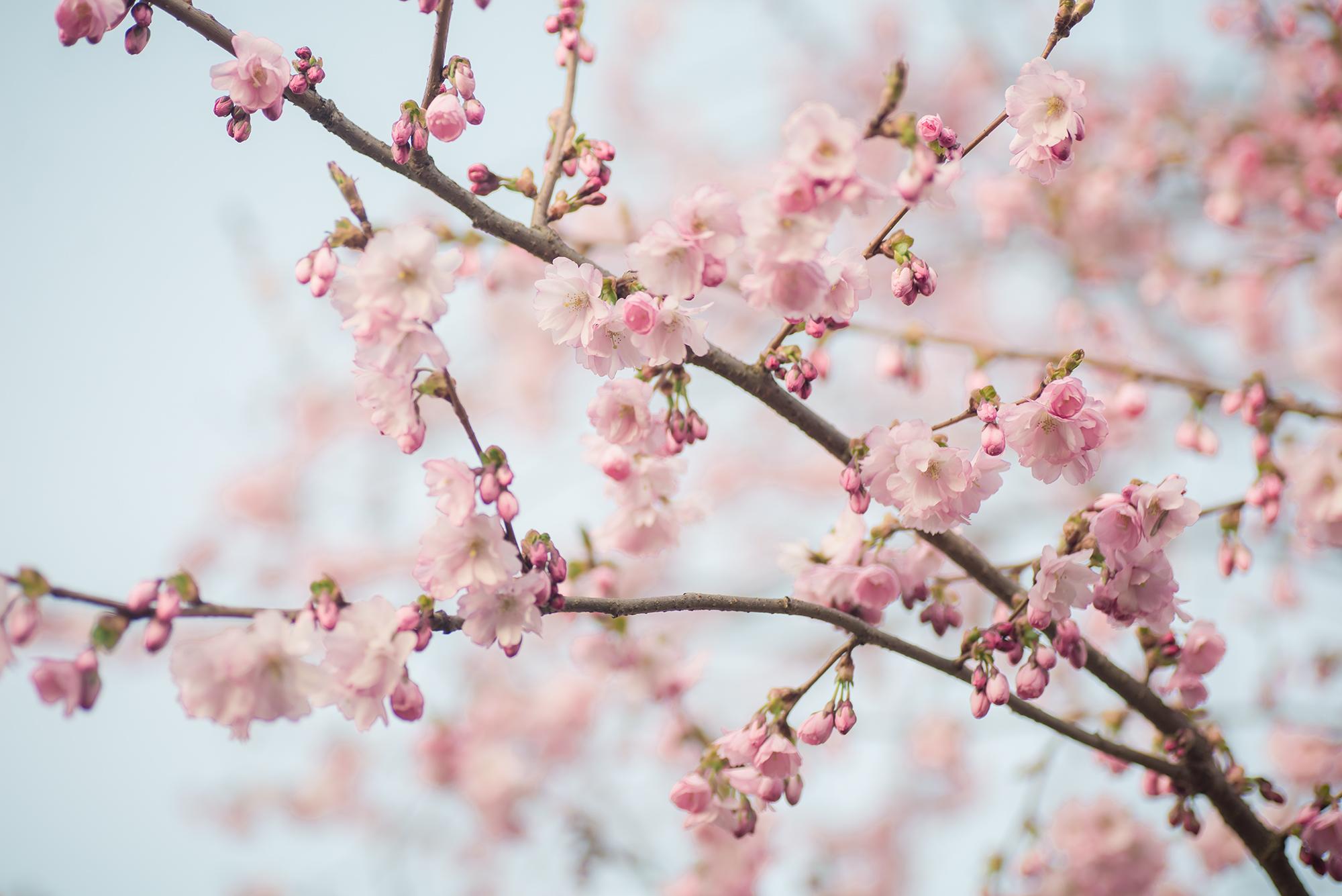karinafotografi_blommor1